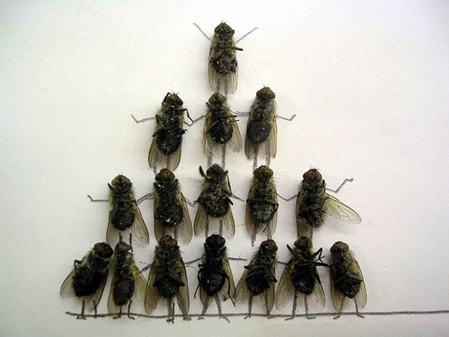 An effective means of flies