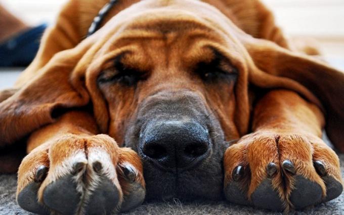 Когти собаки