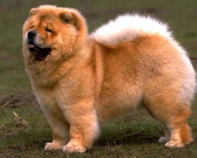 Хрипота у собаки говорит о наличии заболевания.