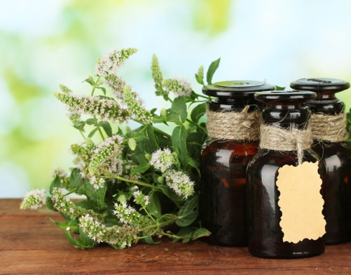 Essential oil of mint for hair