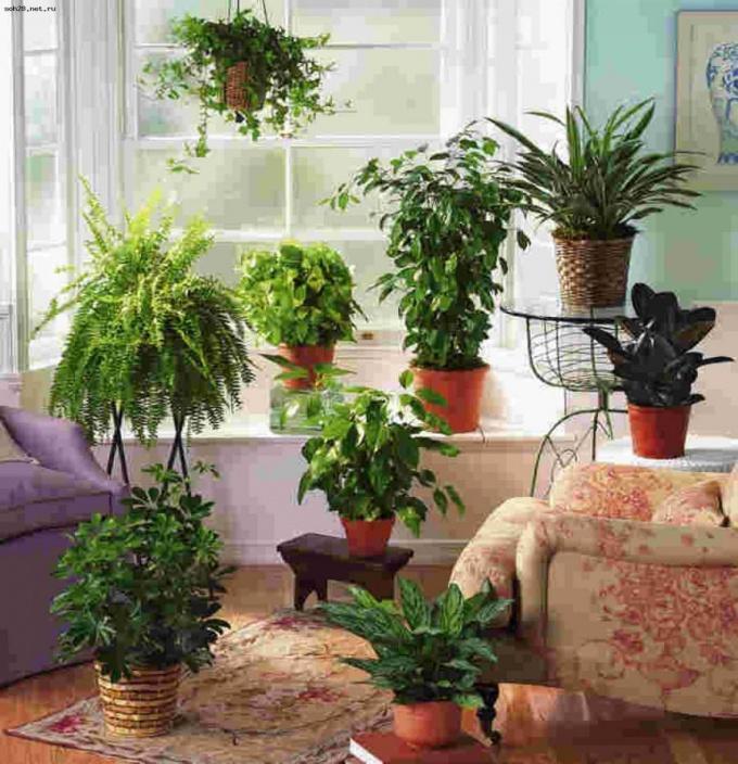 Как подобрать и размастить растения, чтобы в темной комнате стало уютно