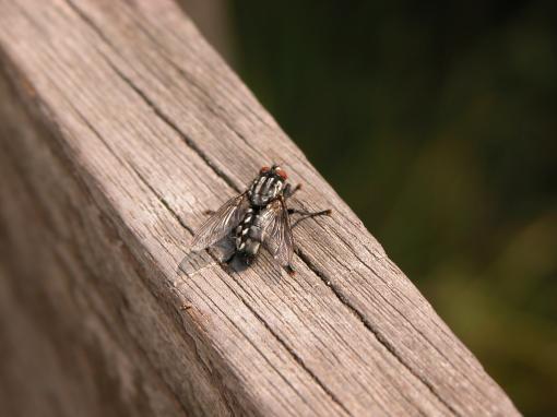 Какой вред от насекомых
