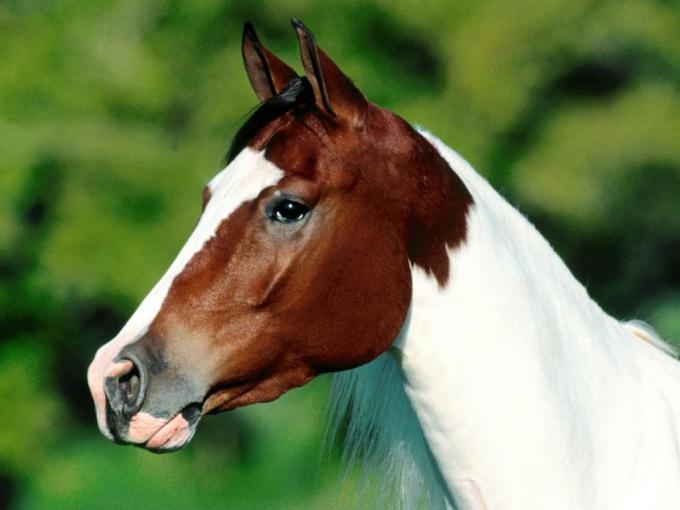Лошадь - символ скорости и грации