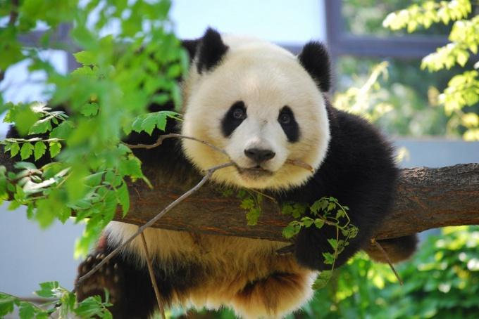 5 лучших зоопарков мира