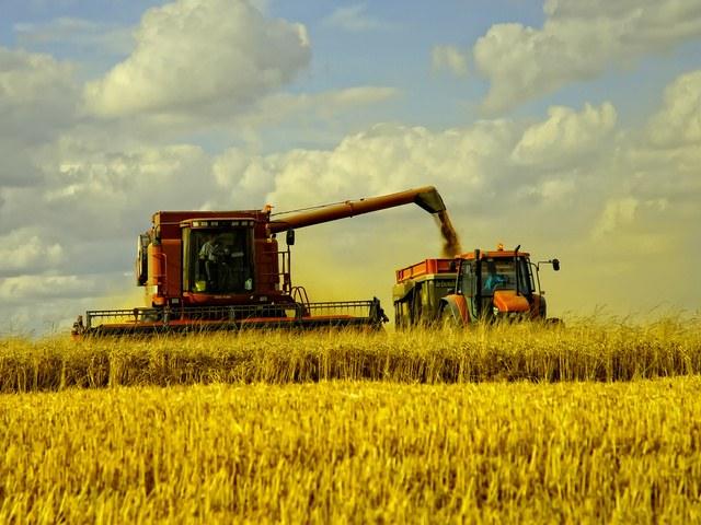 Все про хлеб: как его выращивают