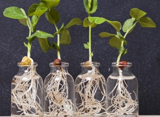 Матодом гидропоники - без почвы - можно выращивать на подоконнике различные пряные культуры