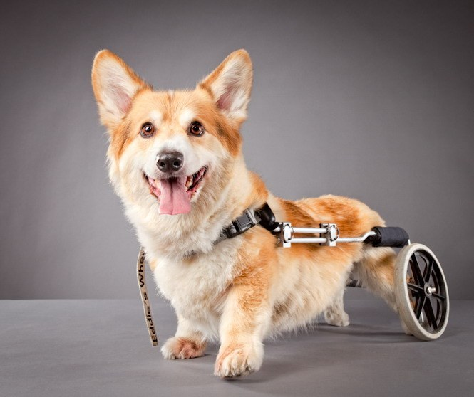 Коляска для собак - роскошь или необходимость