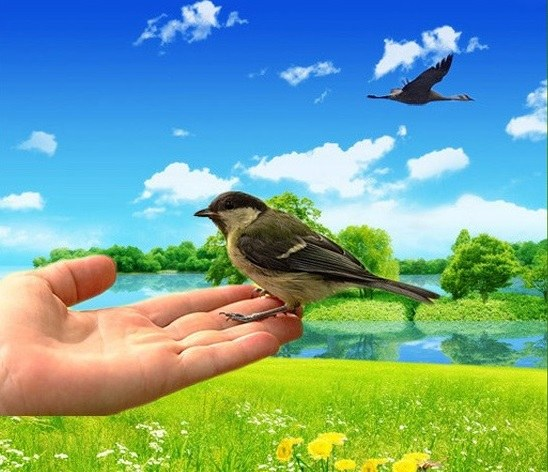 Which is better: a bird in the hand or pie in the sky