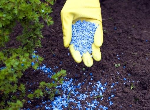 Растения нуждаются и в органических, и в минеральных удобрениях