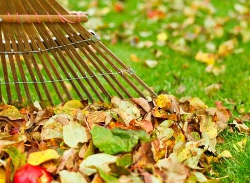 Чтобы сохранить газон до весны, к зиме его необходимо подготовить