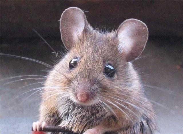 """Что означает фраза """"Гора родит мышь"""""""