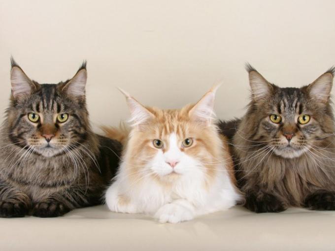 Документы на кота необходимы для участия в выставках