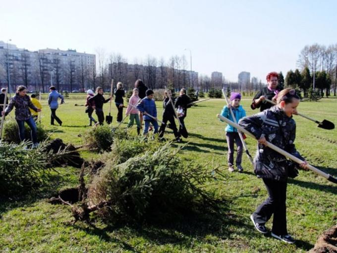 Школьники сажают деревья