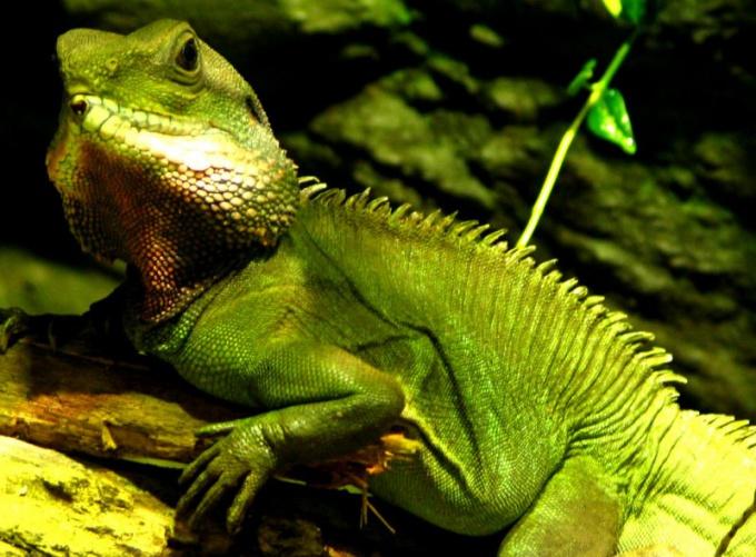 У рептилий замкнутая кровеносная система