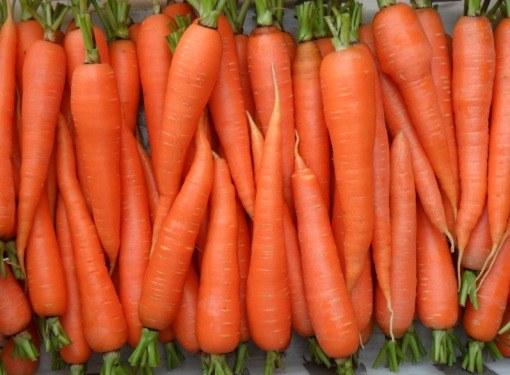 Лучше всего хранятся среднеспелые и поздние сорта моркови