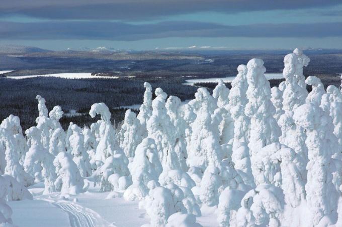 Виды снега