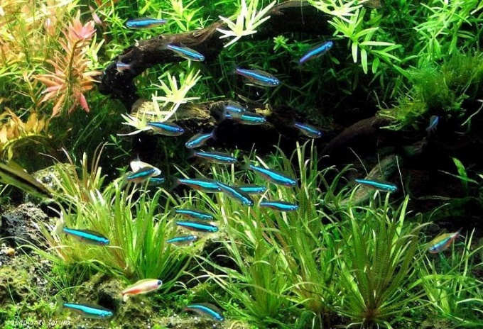 What number of fish should live in a 30 litre aquarium