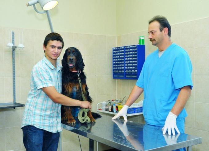 Что делать после кастрации животного