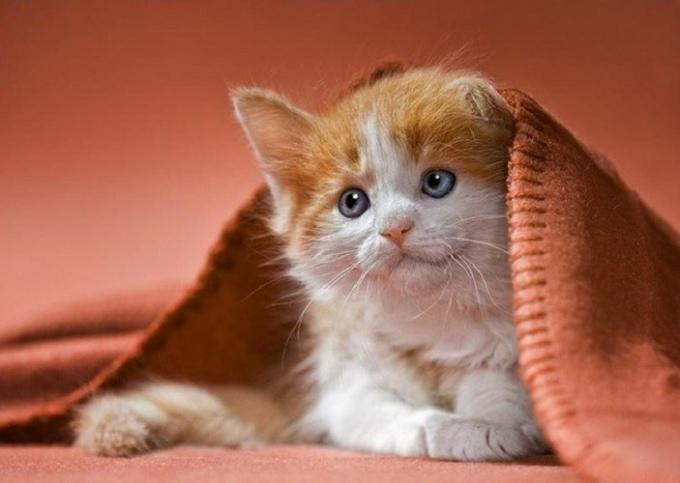 Почему котенок чешет уши и трясет головой