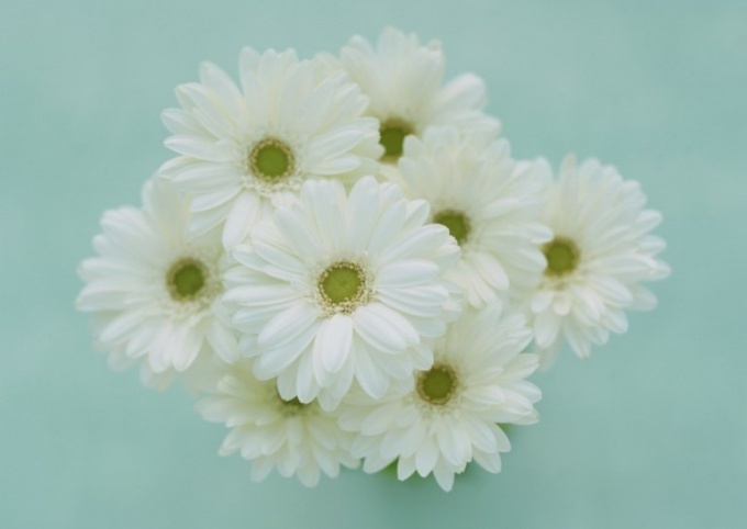A bouquet of white chrysanthemums