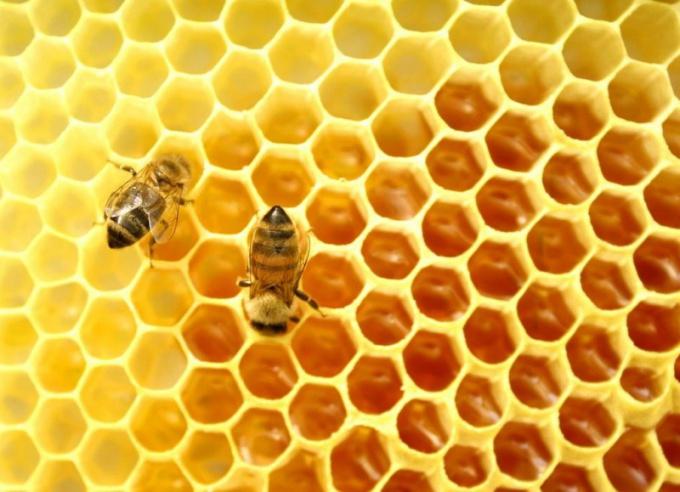 Пчелиный воск широко используется в косметологии и медицине
