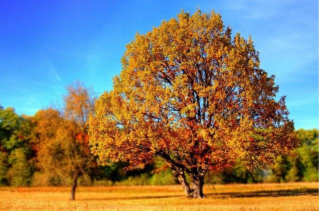 Какая погода в Тольятти осенью