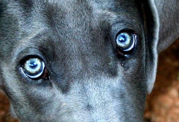 Симптомы коньюктивита у собаки