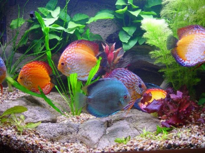 Совместимость аквариумных рыб - дело непростое!
