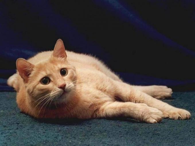 Причины, по которым коты гадят в доме, могут быть самыми разными!