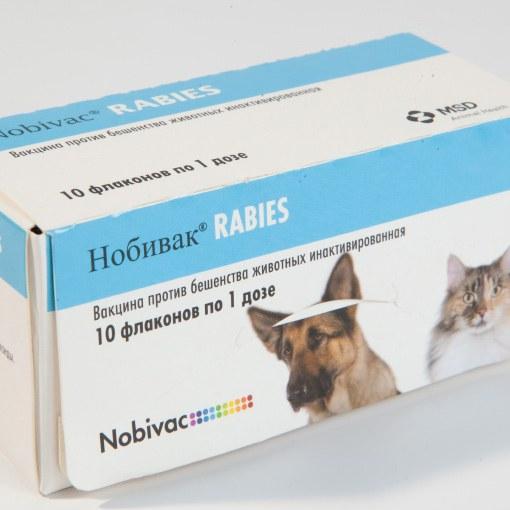 Вакцина для беременной кошки