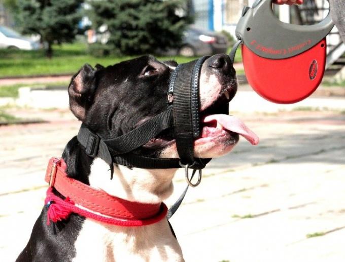 Намордник для собаки — нужный аксессуар для неуравновешенных