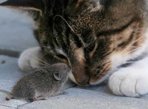 Может ли кот съесть отравленную мышку