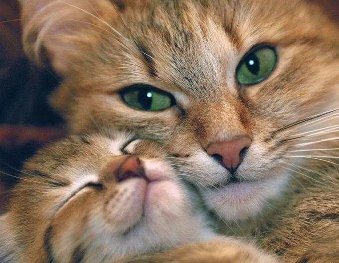 Кошка с котенком.