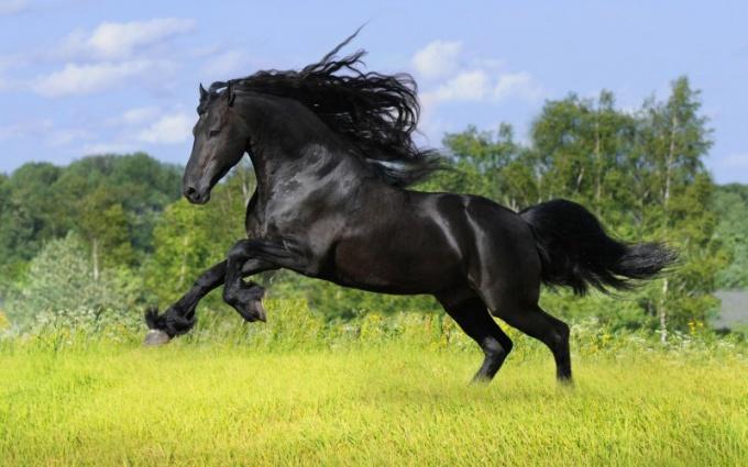 Какой аллюр у лошадей самый быстрый