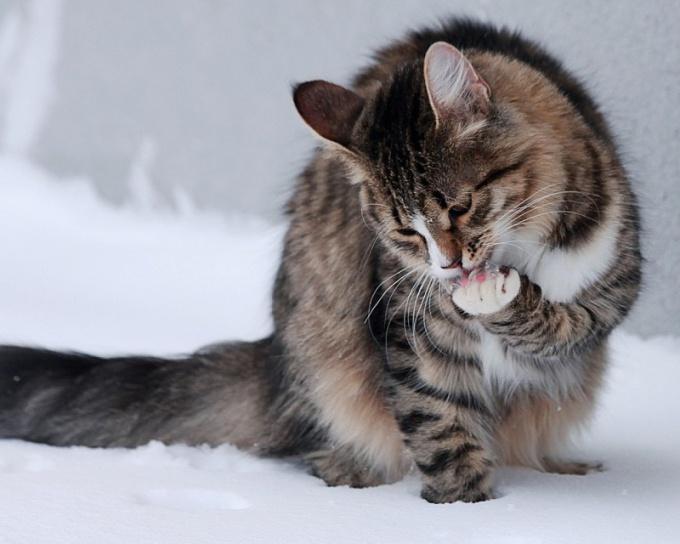 Какие запахи не любят кошки