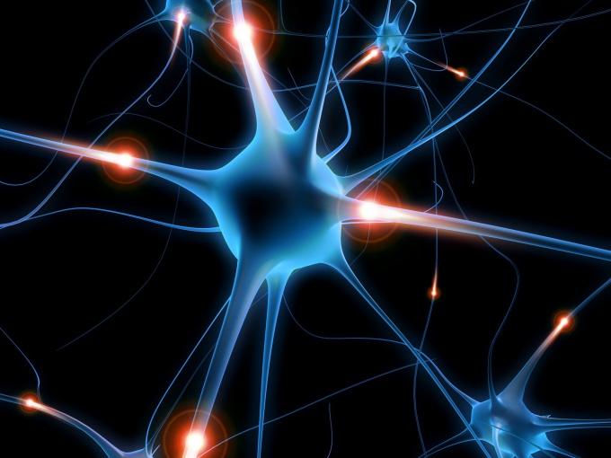 Нейроны и нейропластичность