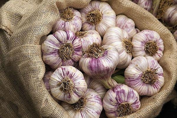 When to remove winter garlic