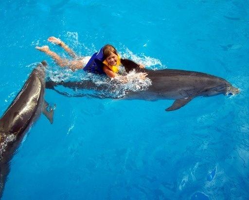 «Мир Дельфинов» в Хургаде