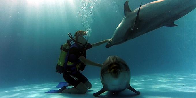 Дом дельфинов, Марса-Алам