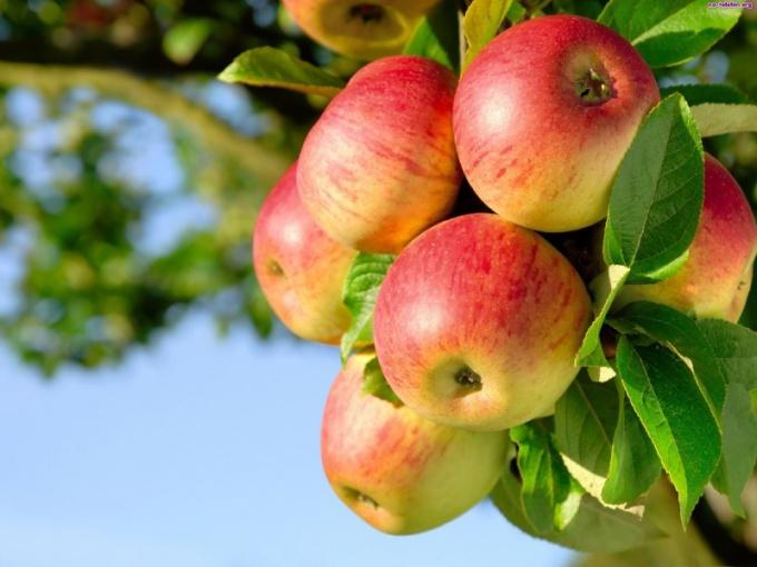 Какие витамины содержатся в яблоке