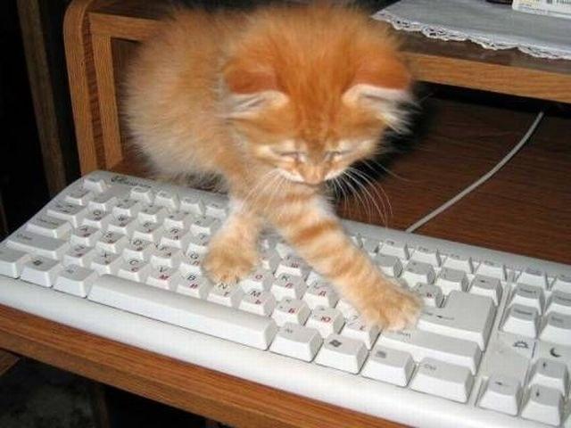 Какое животное больше всего любит компьютер