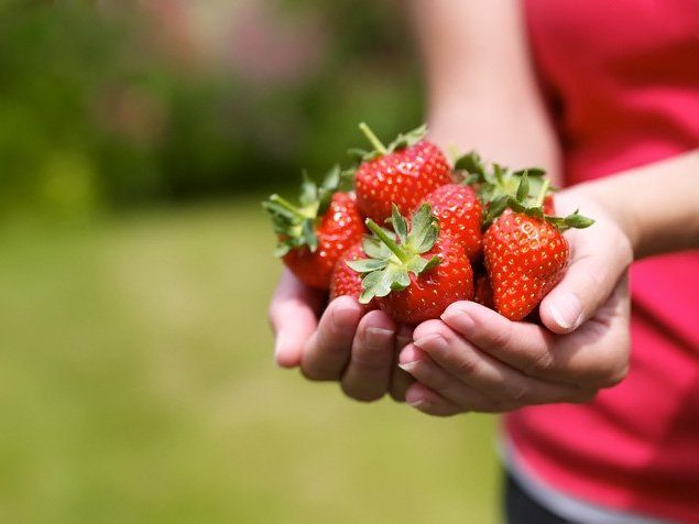 Как ухаживать за клубникой после сбора урожая