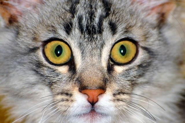 Завещание коту