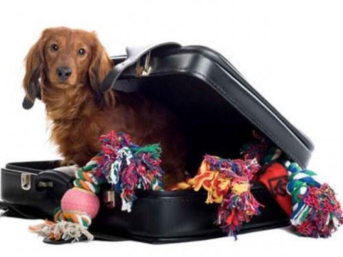 Какие документы нужны для перевозки животных