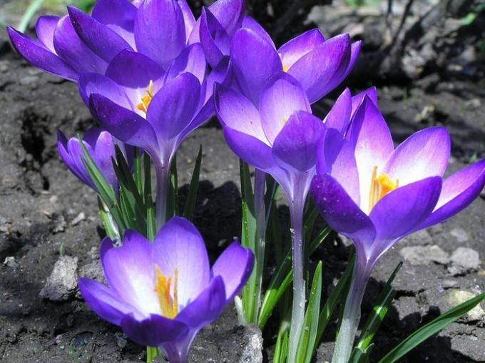 Какие изменения происходят в природе к весне
