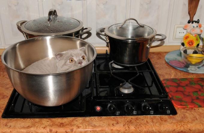 """Откуда произошла фраза """"суп с котом"""""""