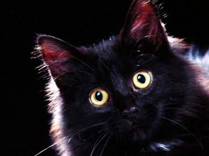 Примета о черной кошке - самая плохая в мире!