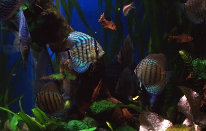 Почему в аквариуме зеленеет вода
