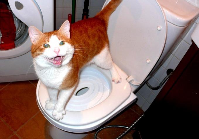 Лечение запора у котов - дело ответственное!