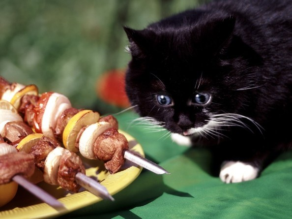 How much food should kitten